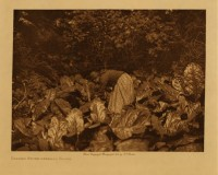 Digging Skunk Cabbage Roots, Edward S. Curtis.  Photo courtesy of The Curtis Collection.