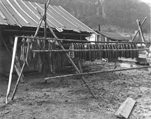 Salmon drying outside at Celilo Village, Oregon.