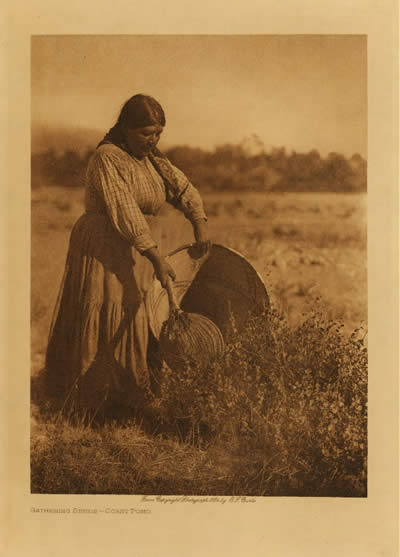 Coast Pomo gathering seeds, Edward S. Curtis. Photo courtesy of The Curtis Collection.